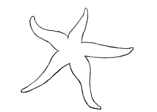 Drawn starfish doodle To Starfish A How To