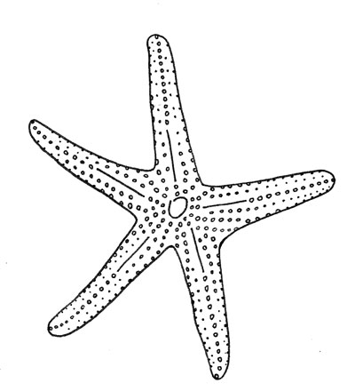 Drawn starfish doodle How » Archive Starfish »