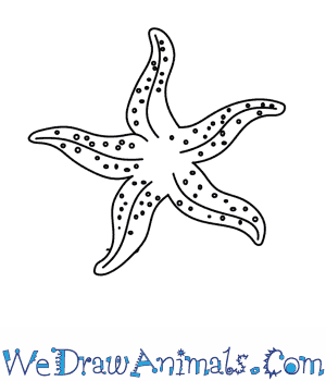 Drawn starfish easy Starfish To A To How