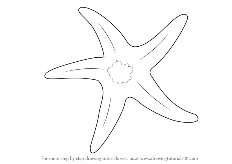 Drawn starfish easy Png To Draw A Draw