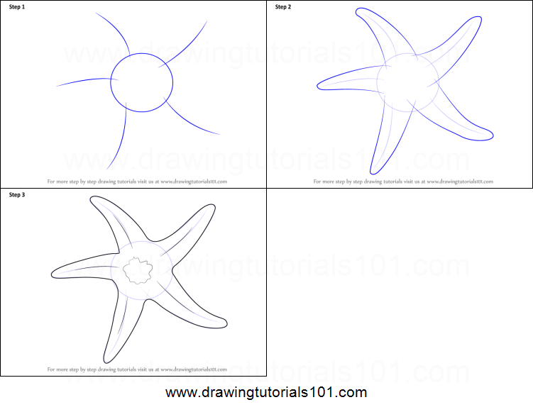 Drawn starfish easy Step How Starfish Draw Draw