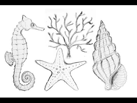 Drawn starfish easy Coral Draw step Starfish Life