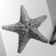 Drawn starfish funny Art  @elle_wills Starfish Contemporary