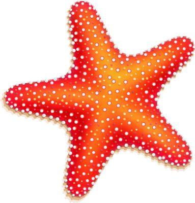 Realistic clipart starfish Online starfish ideas Fotor Best
