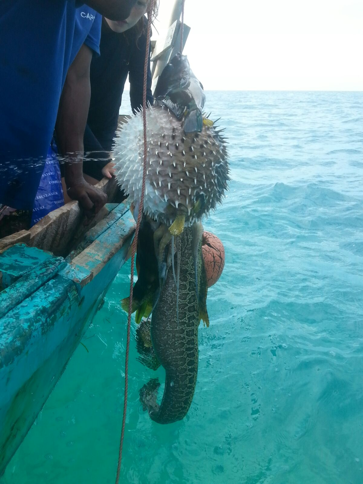 Drawn starfish saltwater fish Out was tide next the