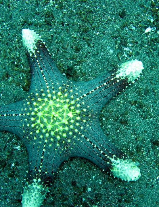 Drawn starfish saltwater fish Images Рыбки on this more