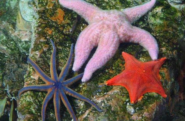 Drawn starfish saltwater fish Aquarium National Aquarium Stars –