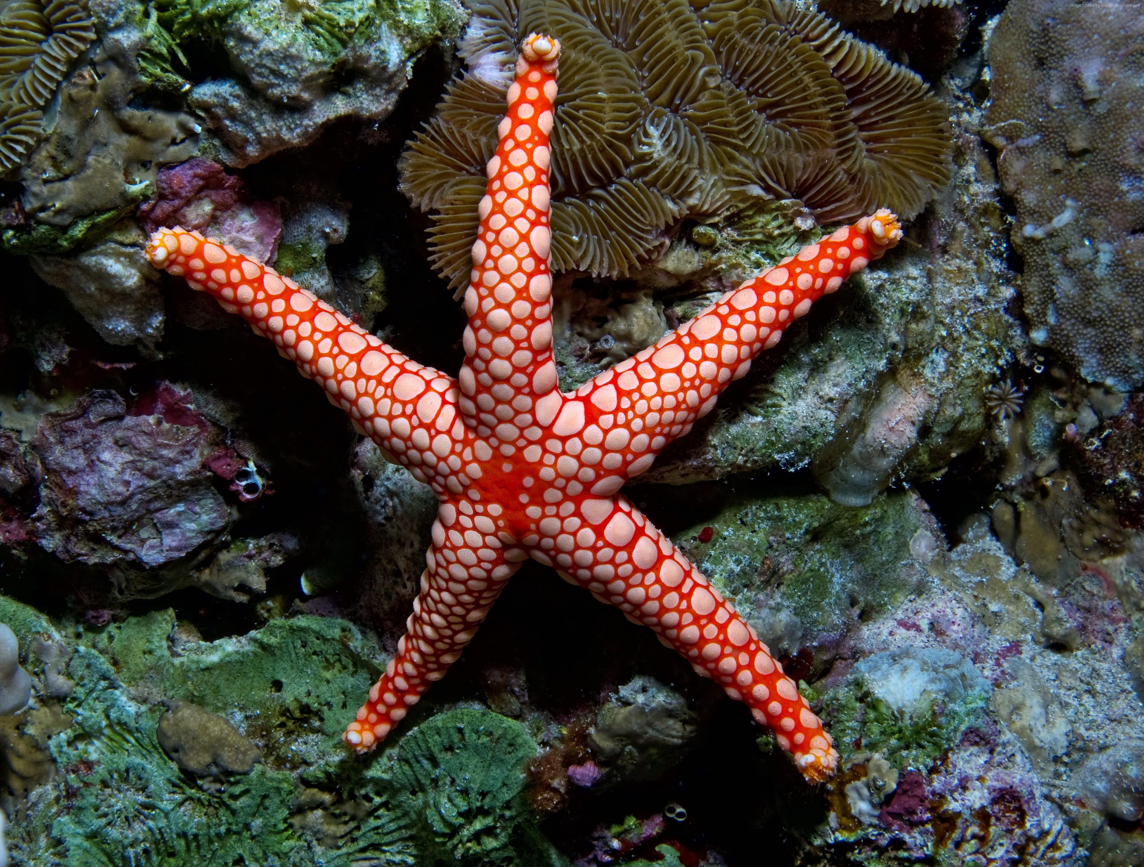 Drawn starfish underwater Your  monilis Indian 1024x1024