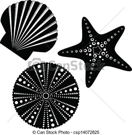 Drawn sea life starfish Scallop life starfish csp14072825