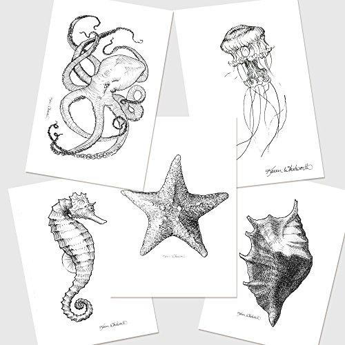 Drawn sea life starfish Amazon of Octopus Sea com: