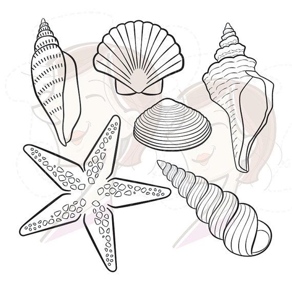 Drawn starfish seashell Digital Birthday  Seashell Decor
