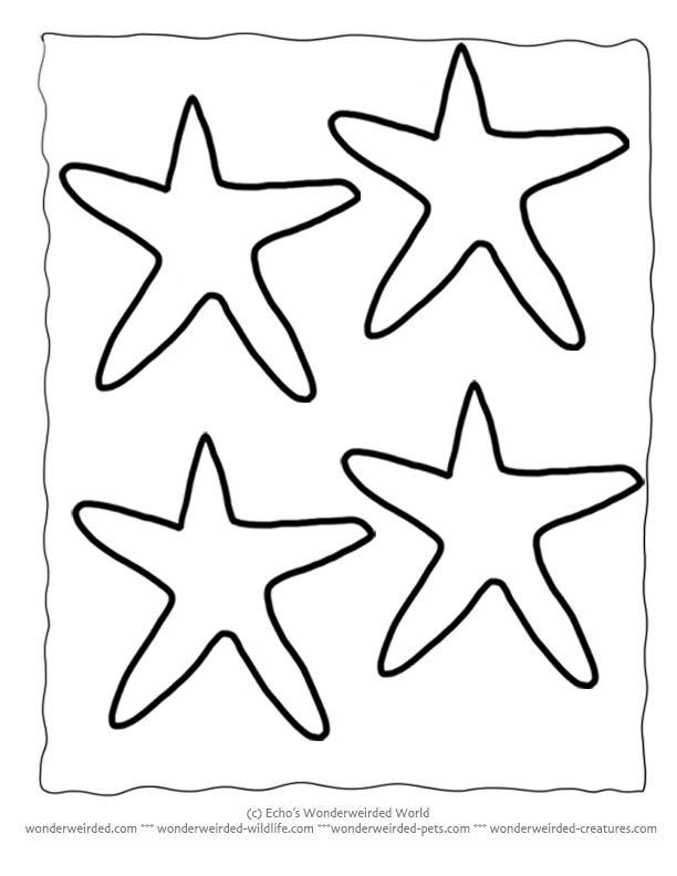Drawn starfish vector Fish on 25+ ideas star