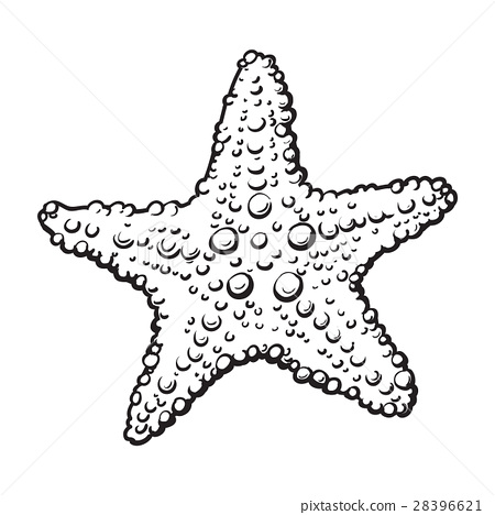 Drawn starfish underwater Drawn starfish organism Hand drawn