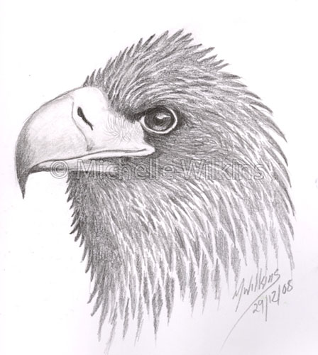 Drawn steller's sea eagle Steller's by Sea by Sea