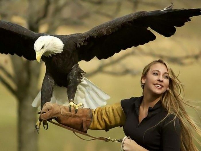 Drawn steller's sea eagle bird