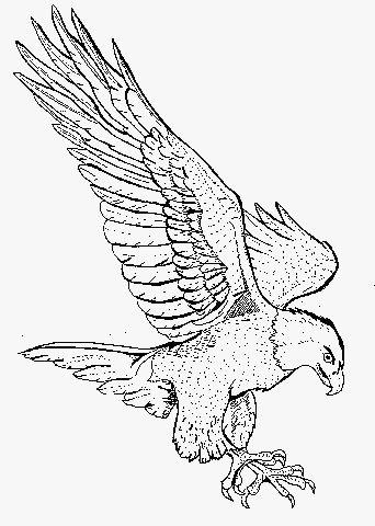 Bald Eagle clipart pagemaker 194 For images best Bald