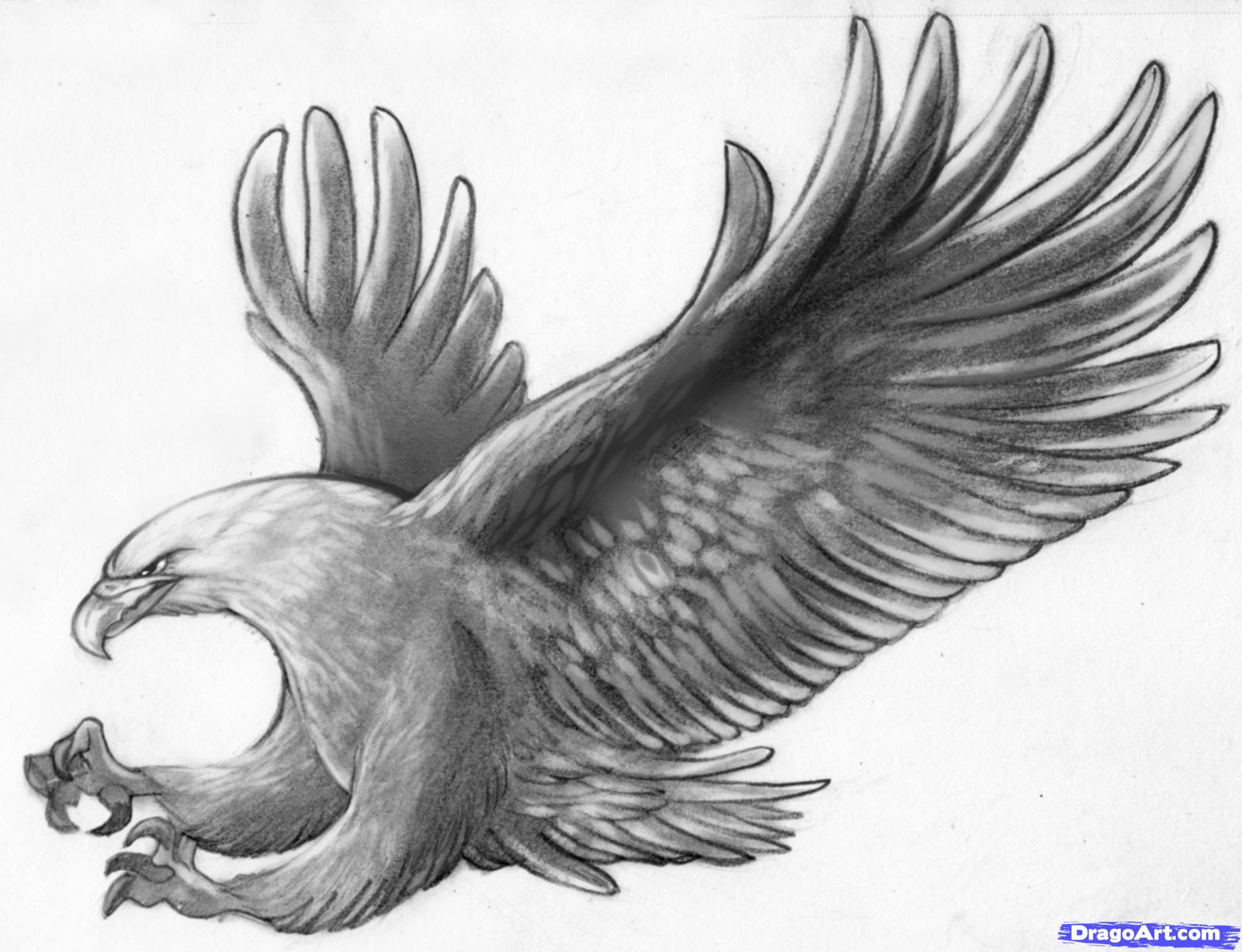 Drawn steller's sea eagle dragoart Eagle eagle in about an