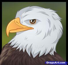 Drawn steller's sea eagle dragoart Samuelsson head Pin draw Draw