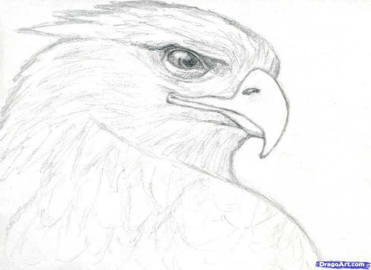 Drawn steller's sea eagle dragoart And dragons feathers Pinterest on
