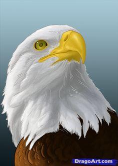 Drawn steller's sea eagle dragoart Spirit bald eagles draw on