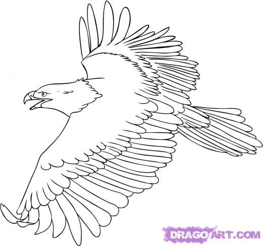 Drawn steller's sea eagle dragoart More PAINTING on DRAWING Pinterest