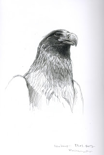 Drawn steller's sea eagle step by step Nürnberg sea in eagle zoo