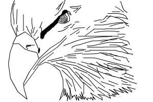 Drawn steller's sea eagle easy draw Sea steller's eagle eagle to
