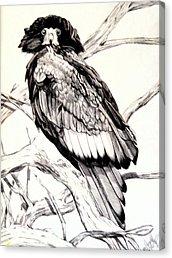 Drawn steller's sea eagle easy draw Poland Sea Majestic Majestic Cheryl