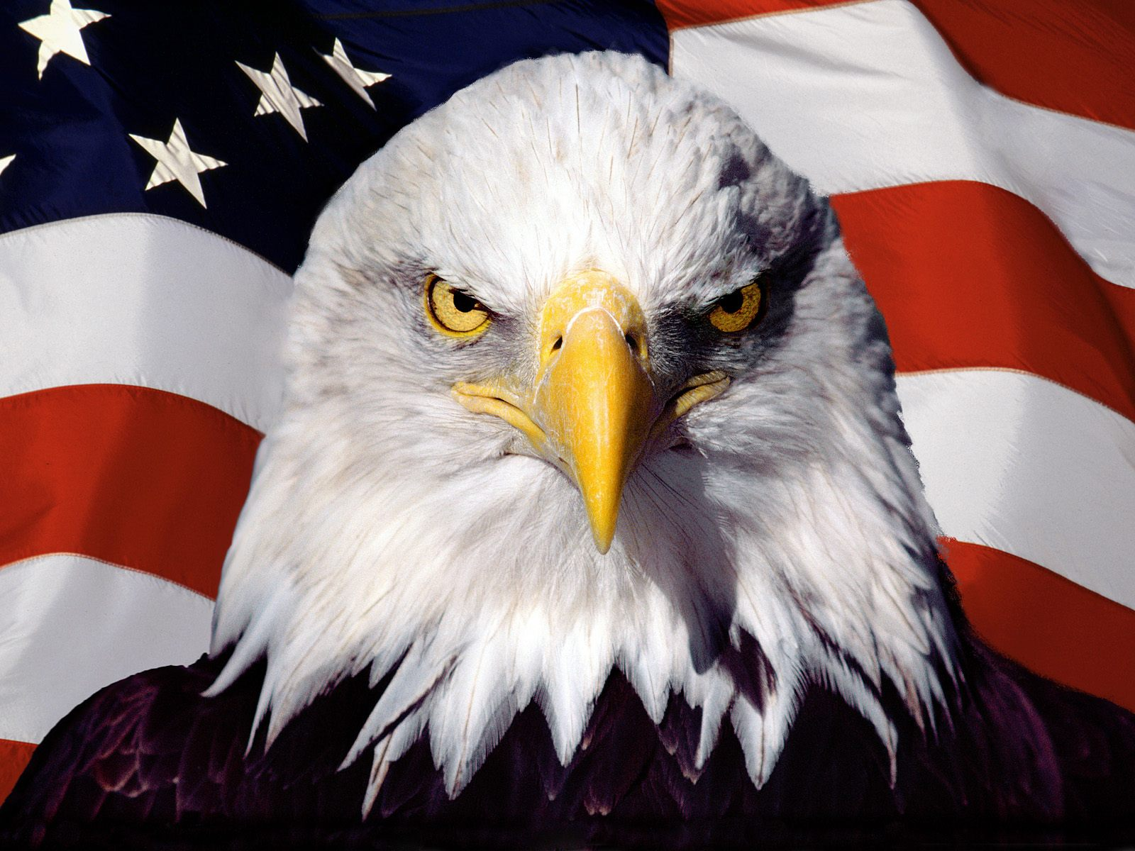 Drawn steller's sea eagle flag america 82  best images on