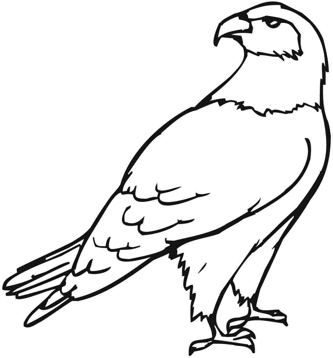 Drawn steller's sea eagle outline Coloring Eagle Download coloring coloring