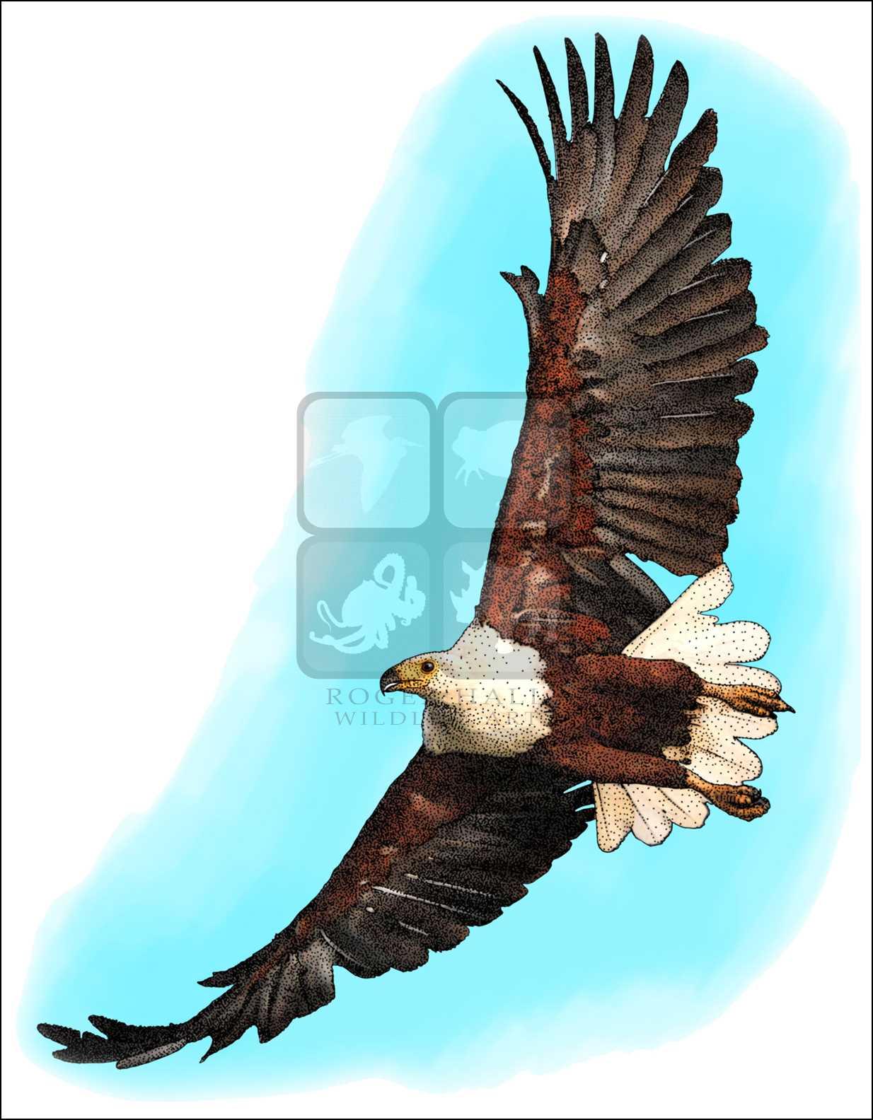 Drawn reptile sea eagle African and Line Eagle