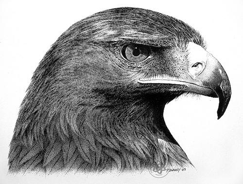 Drawn reptile golden eagle Drawing pen ink Golden eagle