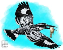 Drawn steller's sea eagle step by step Eagle Kingfisher Sea by by