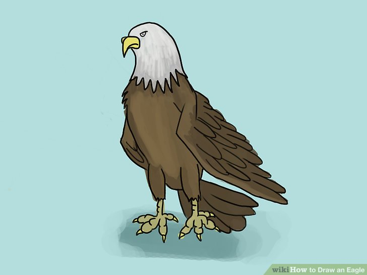 Drawn steller's sea eagle step by step 30 titled Step Draw 4