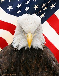 Drawn steller's sea eagle usa flag And Eagle Pinterest Majestic Eagle