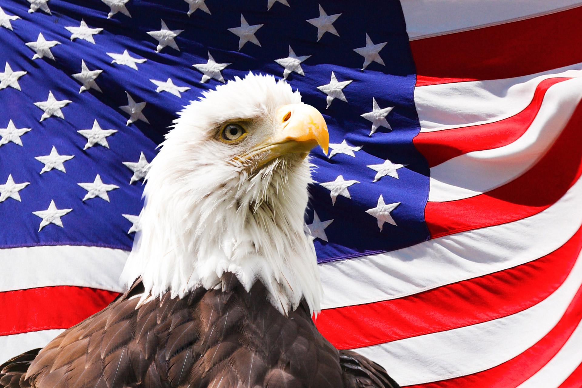 Drawn steller's sea eagle usa flag Hawks Accipitridae Lee's Kites Harpy