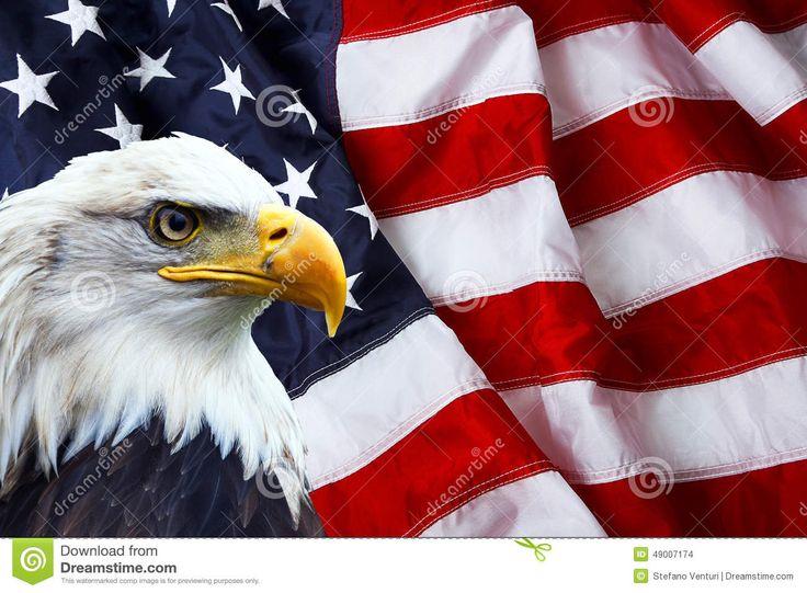 Drawn steller's sea eagle usa flag ImagesAmerican American US images EagleBackground