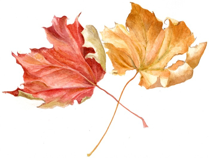 Drawn still life autumn Autumn  leaves life watercolor