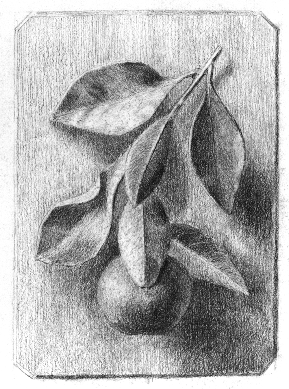 Drawn still life famous artist Life an exercise Student's of