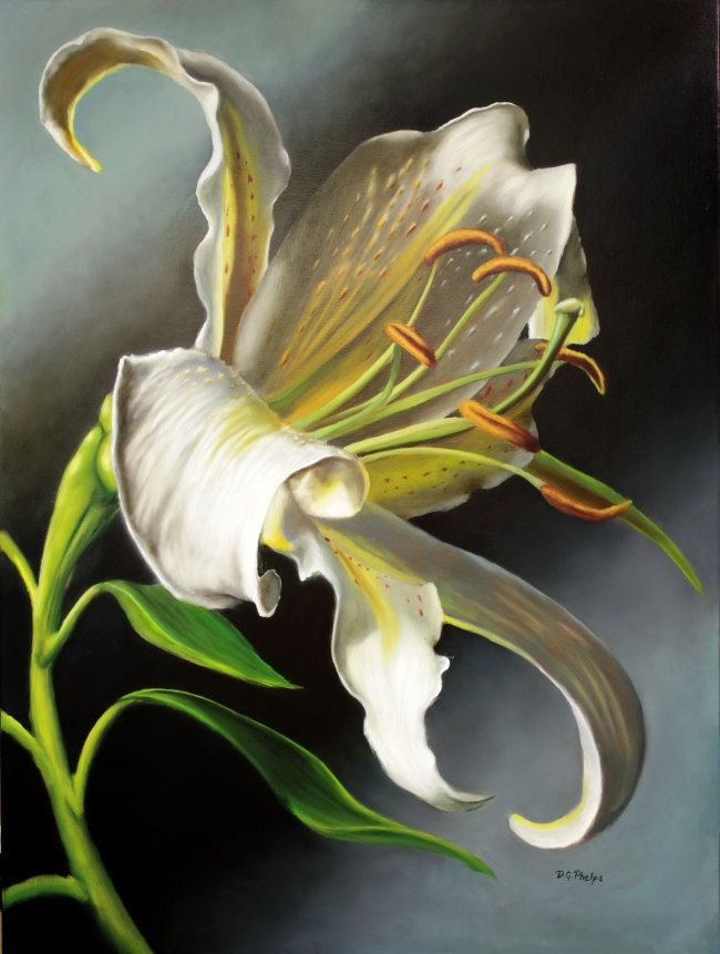 Drawn still life lily Lily on sale pictures artwork