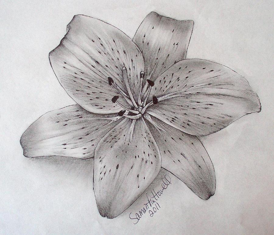 Drawn still life lily Lily and Google Google search