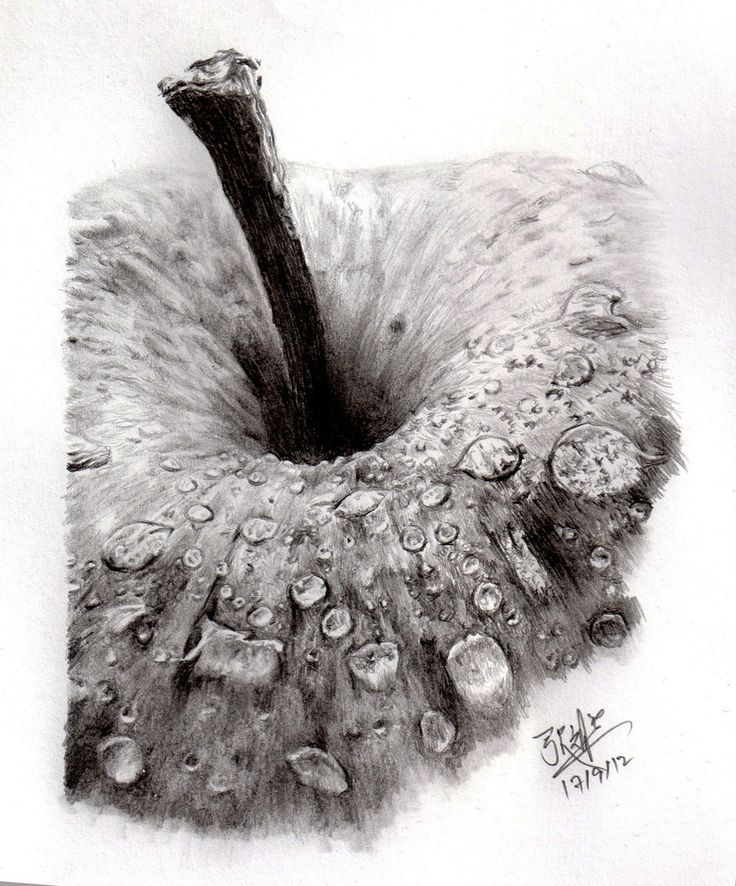 Drawn still life nature ArtEd this sketching more Drawing