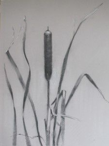 Drawn still life nature On 109 Drawing Pinterest images