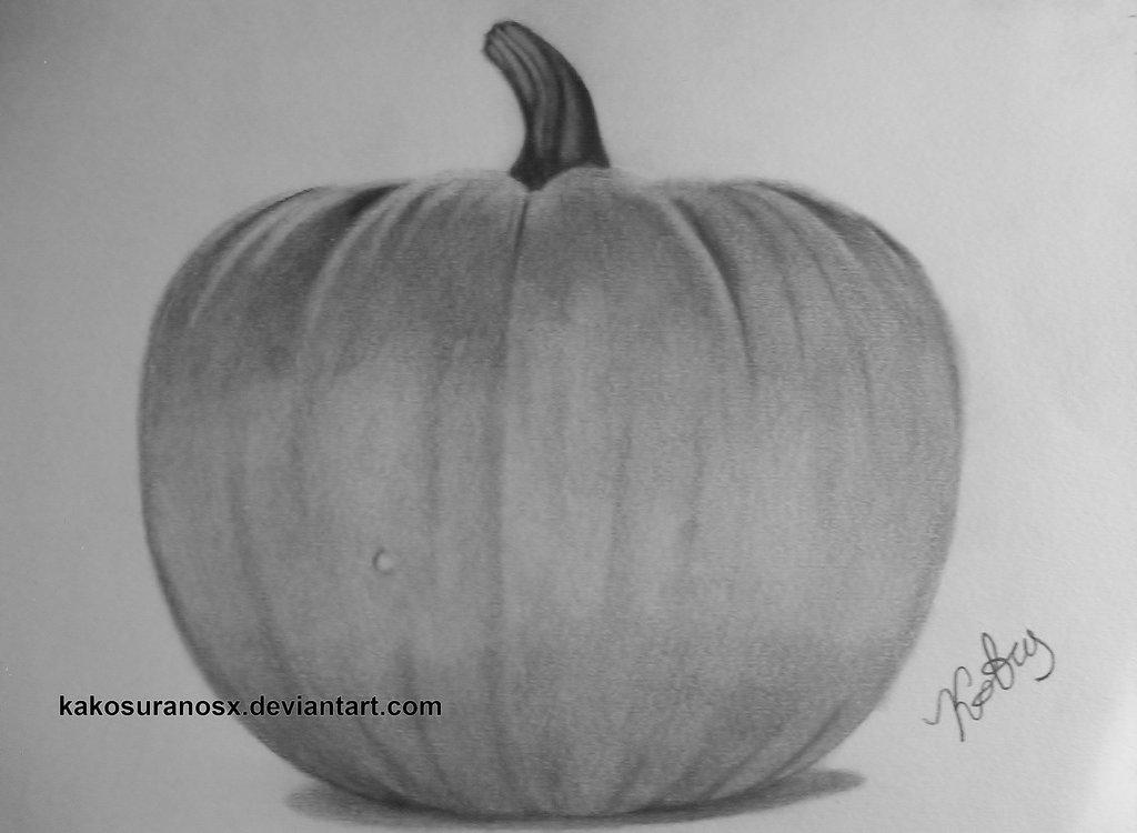Drawn still life pumpkin  Realistic of Pumpkin in