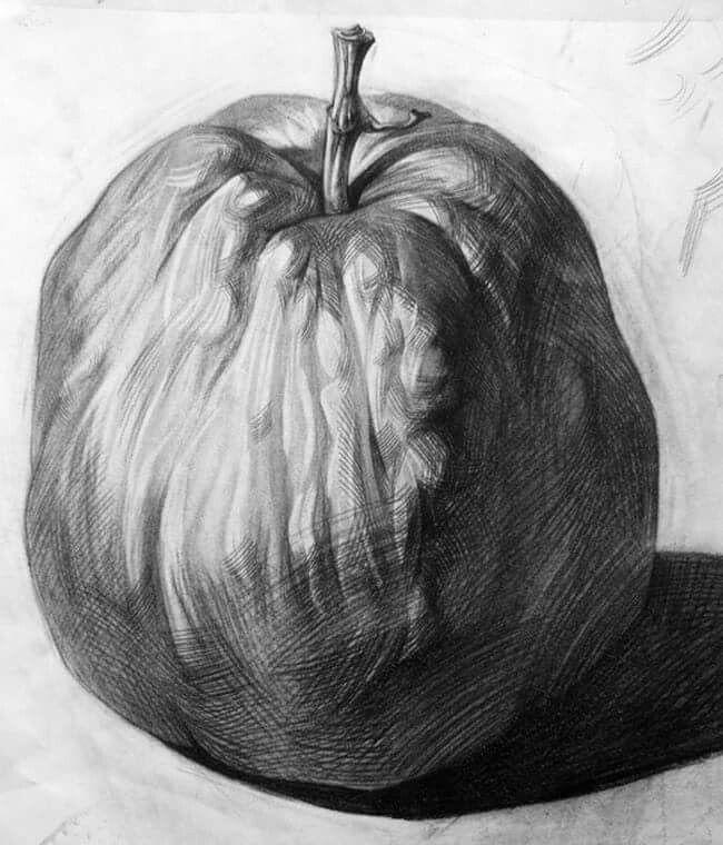 Drawn still life pumpkin Images 155 drawing on best