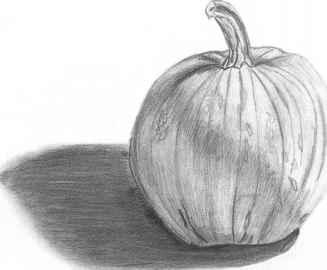 Drawn still life pumpkin Nava to Drawing Seeing Arts