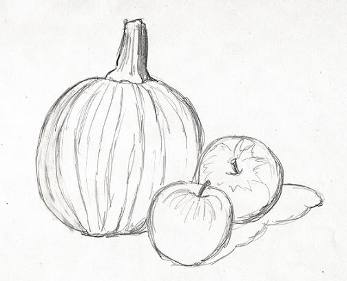 Drawn still life pumpkin Potter potter  Pumpkin beatrix