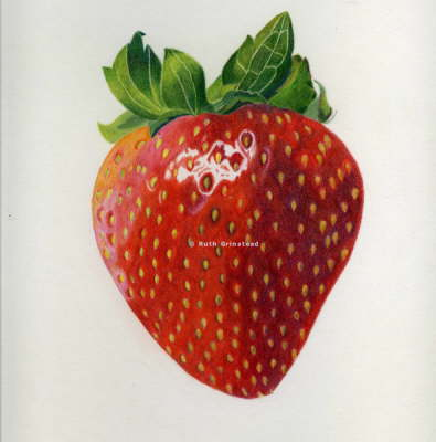 Drawn strawberry color pencil Pencil Grinstead's Coloured Pencil Coloured
