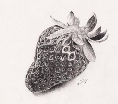 Drawn strawberry realistic Pencil Pinterest 592 on drawing