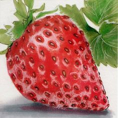 Drawn strawberry realistic Copic realism Strawberry  com